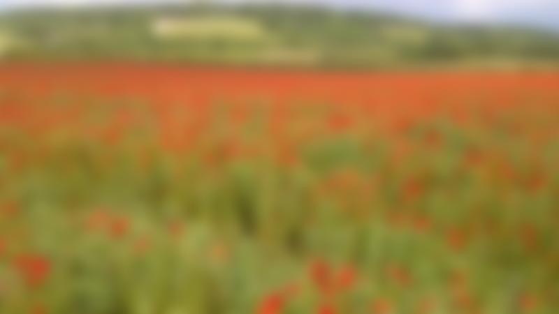 Field of flowers on The Ridgeway National Trail in Avebury
