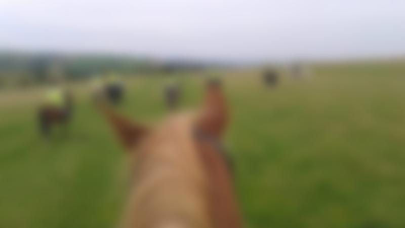 People horse riding at Long Mountain Pony Trekking Centre in Shrewsbury