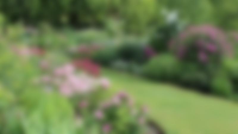 Garden at Coton Manor in Northampton