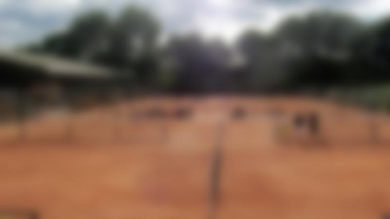 Tennis courts at Sutton Tennis Academy