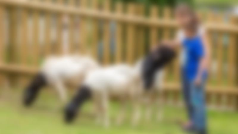 Kids petting sheep at Woburn Safari Park in Milton Keynes
