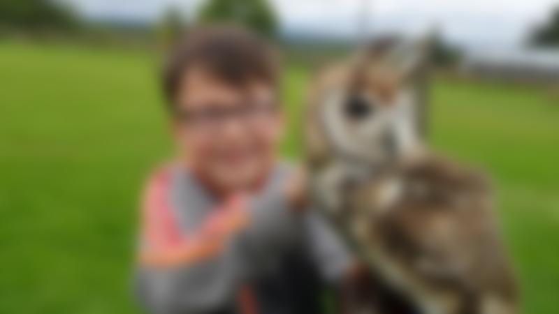 Boy holding owl at Falconry Days in Hexham