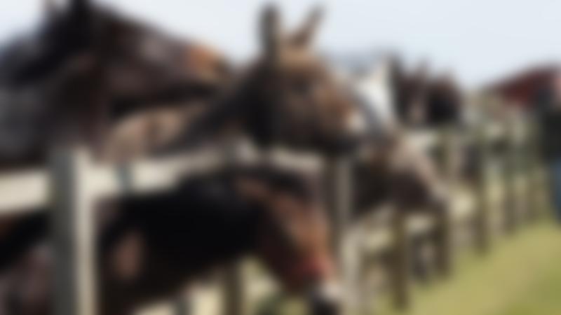 Donkeys at Redwings Horse Sanctuary Caldecott in Fritton