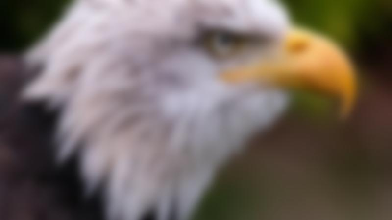 Eagle at World of Wings in Cumbernauld