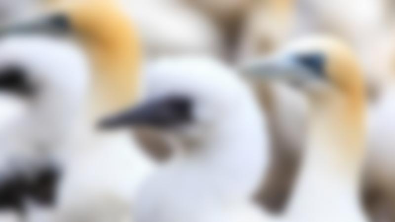 Birds at Scottish Seabird Centre in North Berwick