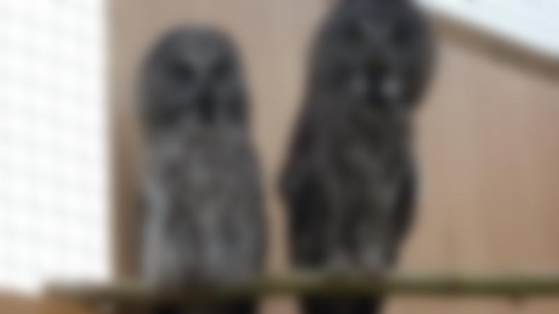 Owls at Rodbaston Visitor Centre Animal Zone in Stafford