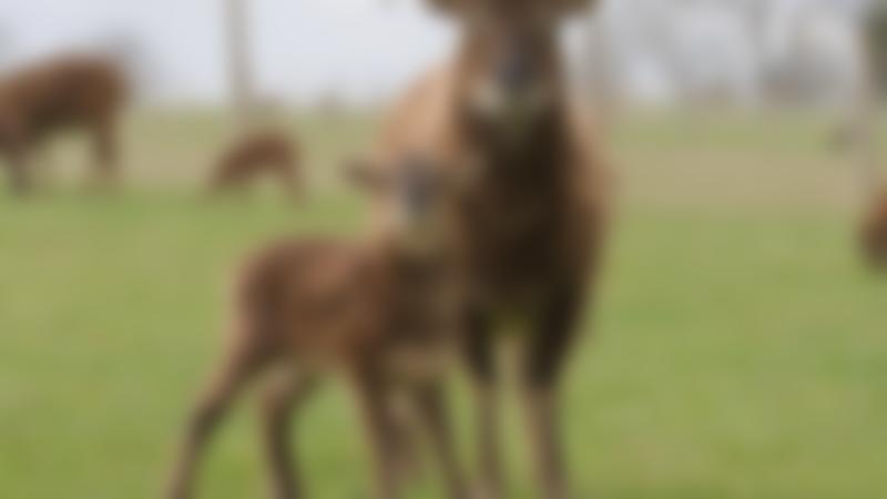 Goats at Mini Meadows Farm in Welford