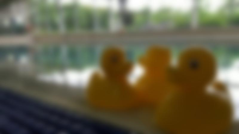Rubber ducks by swimming pool at The Hydro in Harrogate