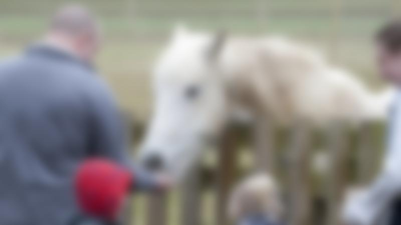 Man feeding horse at Hollow Trees in Ipswich