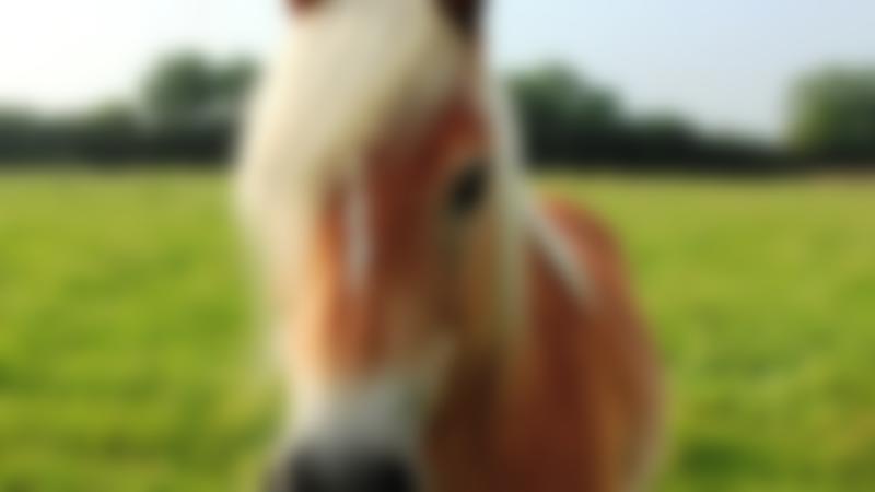 Shetland pony at Rein and Shine in Braydon