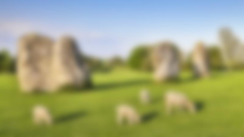 Sheep at Avebury Stone Circle in Malborough