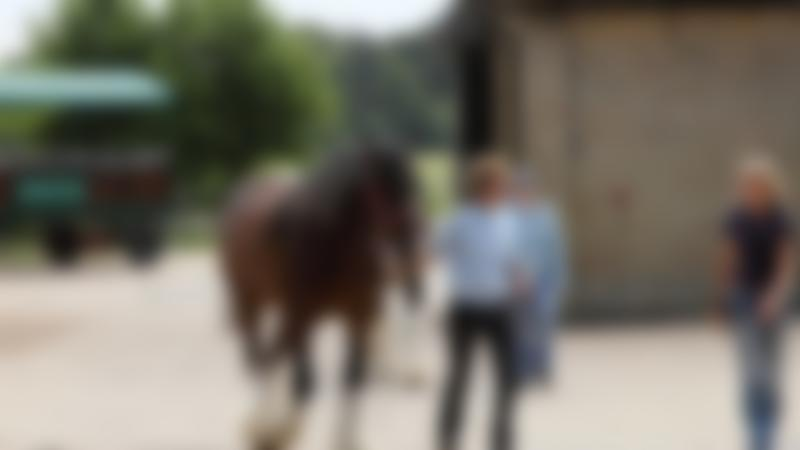 Horse at Wimpole Home Farm in Royston