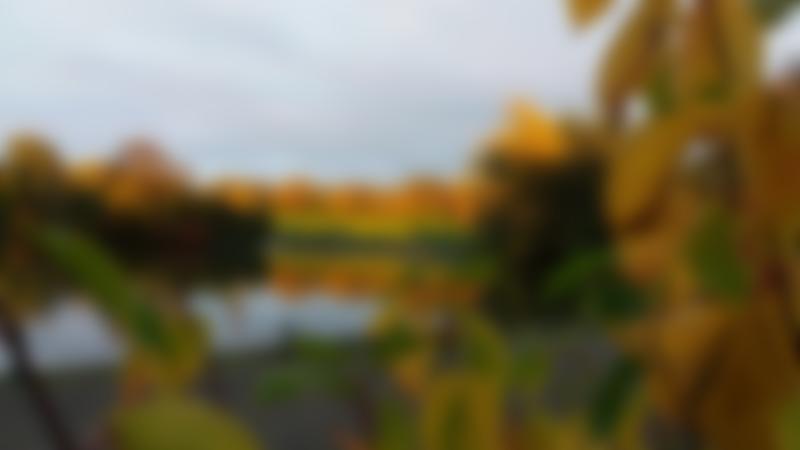 Pond at Saltwell Park in Gateshead