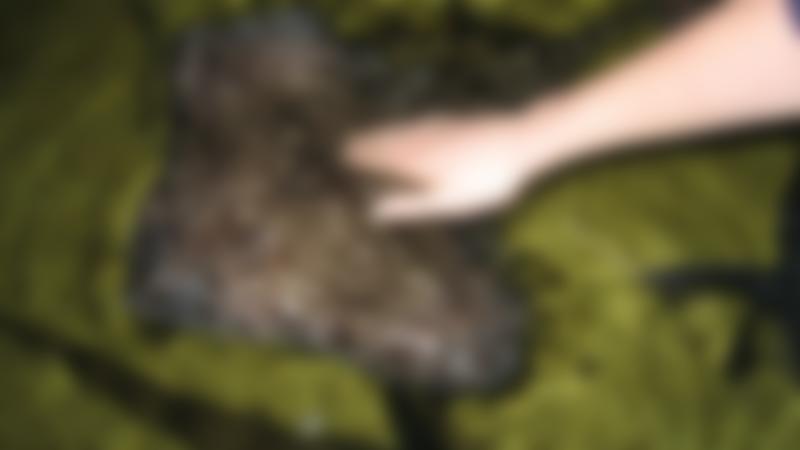 Person touching stingray at Lake District Coast Aquarium in Maryport