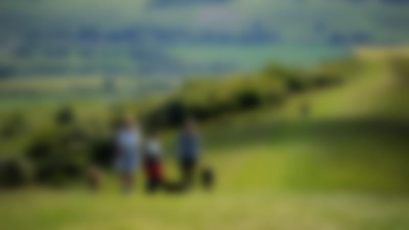 People walking dogs at Ashridge Estate in Berkhamsted