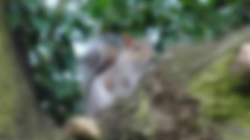 Squirrel at Swanley Park
