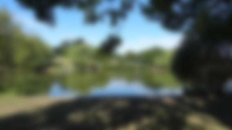 Lake at Swanley Park