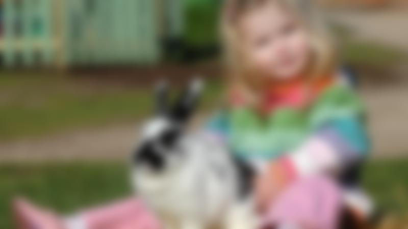 Girl with rabbit at Willows Activity Farm in St Albans