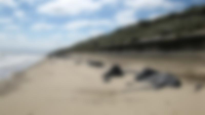 A view of Sea Palling Beach, Sea Palling