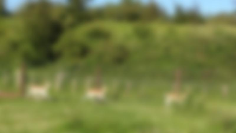 Deer at Shepherds Place Farm in Doncaster