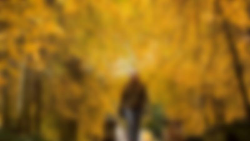 Woman walking dog at Trentham Gardens in Stoke On Trent
