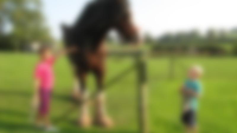 Kids stroking horse at Cotebrook Shire Horse Centre