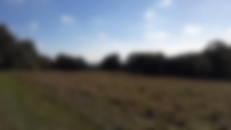 Field at Brockhill Country Park in Hythe