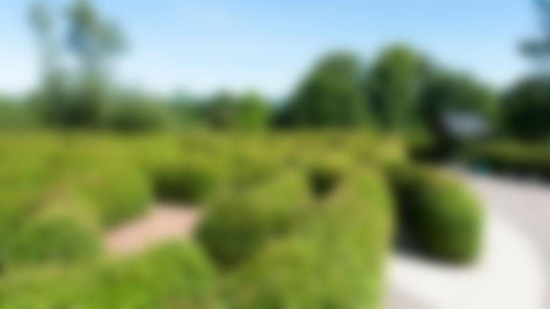 Maze garden at Carnfunnock Country Park in Larne