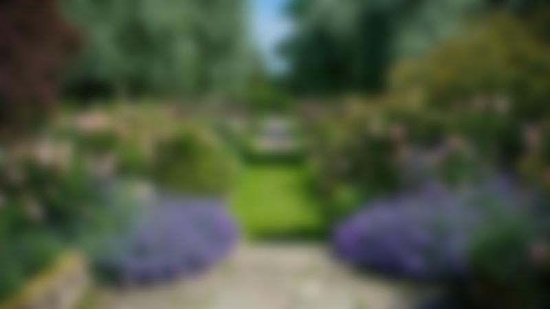 Walking path at Cholmondeley Castle Gardens in Malpas