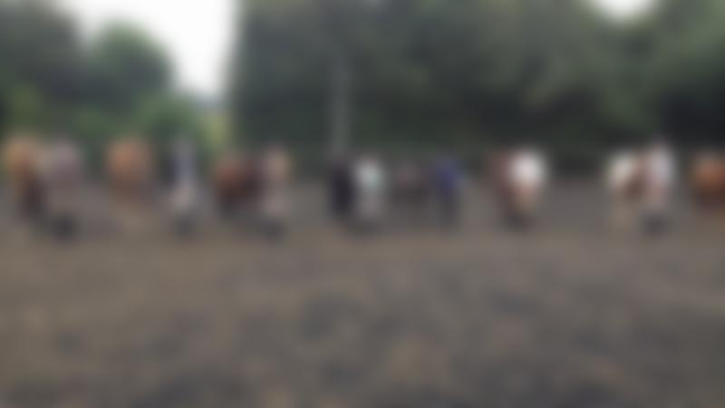 People with horses at Maple Pollard Riding Centre in Bishops Stortford