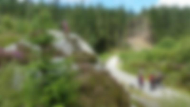 Mountain bikers at 7stanes Ae