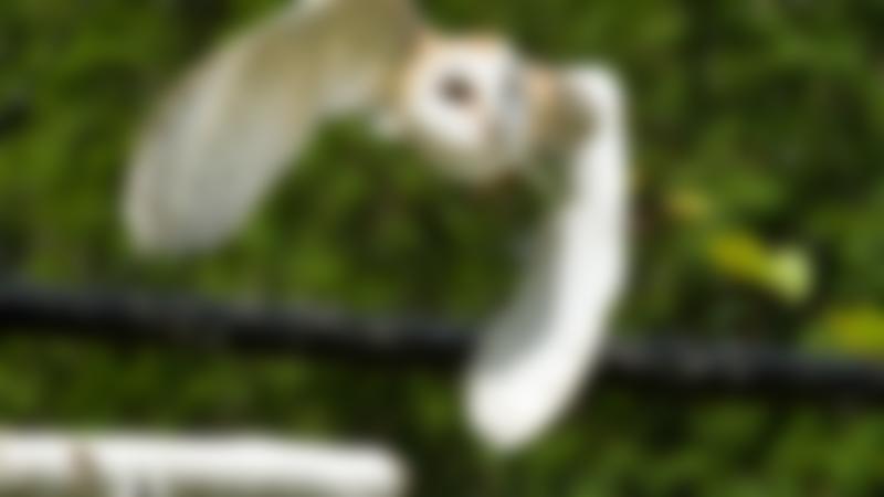 Owl at Birds of Prey Centre in Wilstead