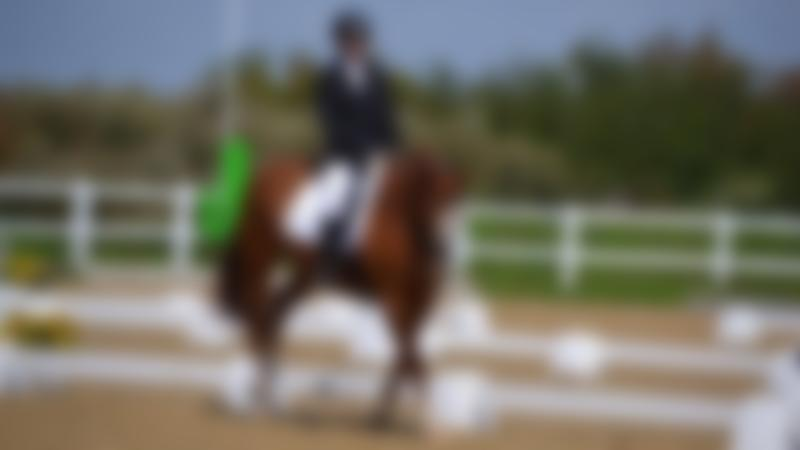 Horse and rider in Brook Stables Riding School in Millbrook