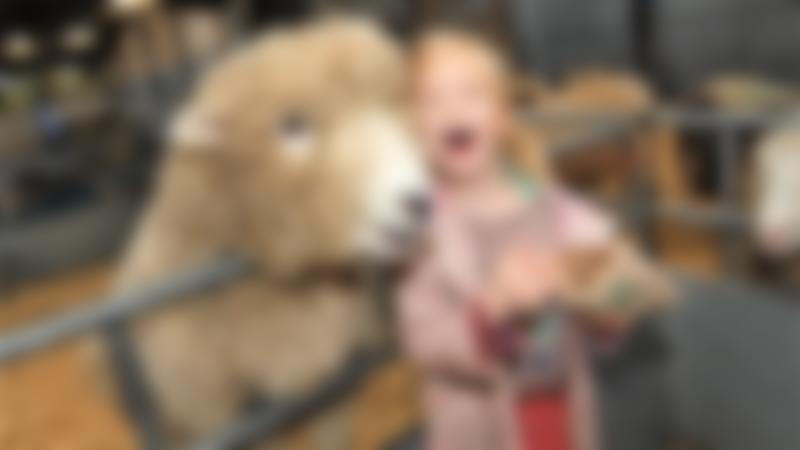 A little girl next to a sheep at Odds Farm Park in High Wycombe