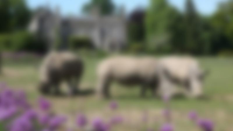 Rhinos at Cotswold Wildlife Park in Burford