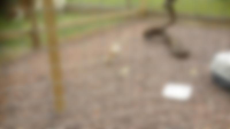 Owl at Paradise Found Educational Farm Park in Sapcote
