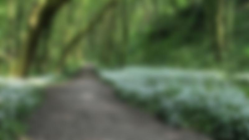 Path at Fairy Glen Valley  near Appley Bridge