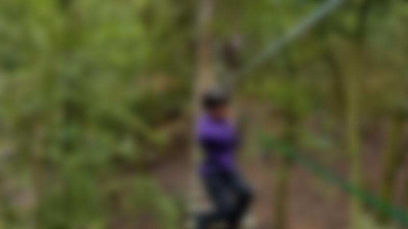A little boy at Go Ape