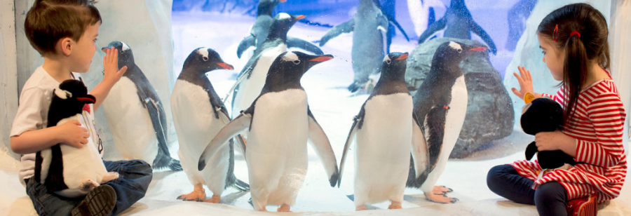Kids with gentoo penguins at National SEA LIFE Centre Birmingham