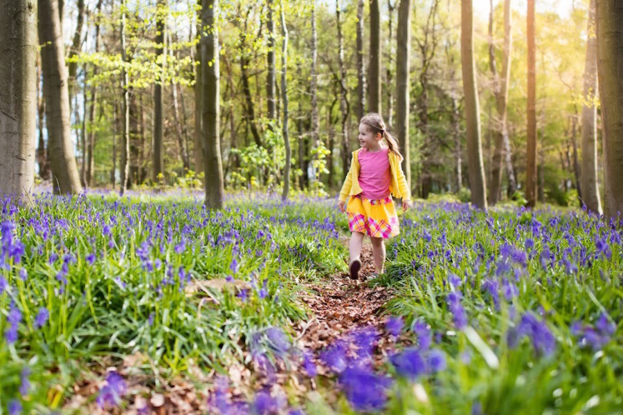 A little girl walking through bluebell woods