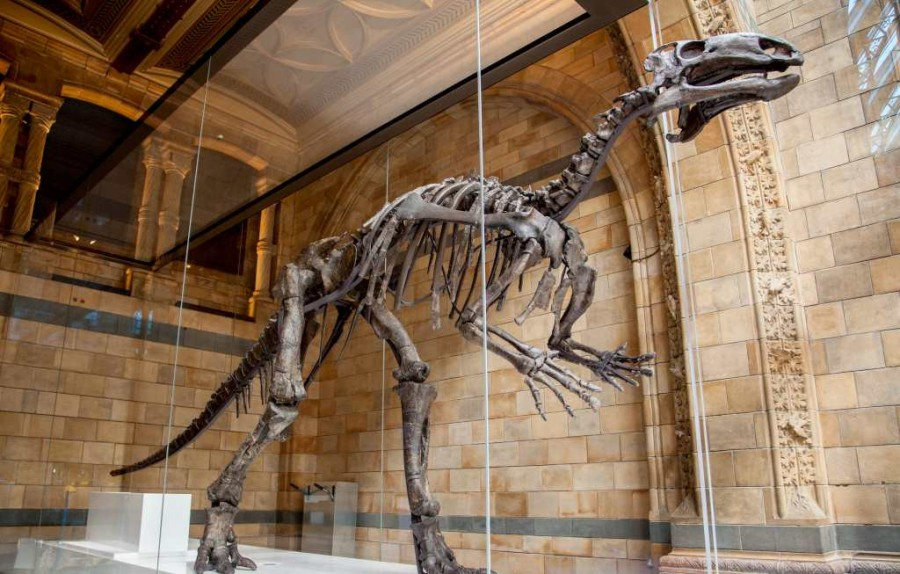 Natural History Museum mantellisaurus-credit-trustees-of-nhm